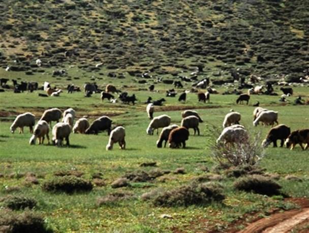 سازمان محیط زیست مخالف حضور دام در مناطق حفاظت شده است